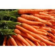 Καρότο Κορινθίας
