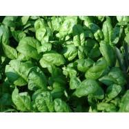 Σπανάκι Φθιώτιδας