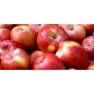 Μήλα Στάρκιν, Κρήτης