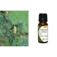Αιθέριο Έλαιο Κέδρου 'Ατλαντας (Cedarwood Atlantica) 10 ml